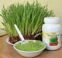 benefits-of-wheatgrass-powder