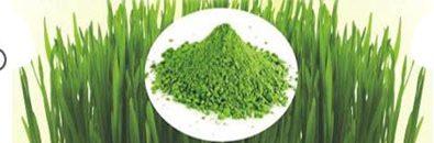 girmes wheatgrass powder
