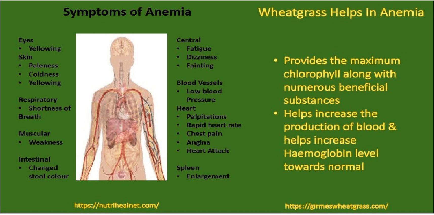 Wheatgrass Powder for Anemia