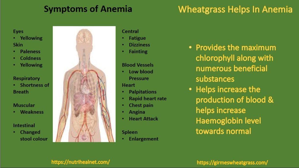 Wheatgrass Powder In Anemia